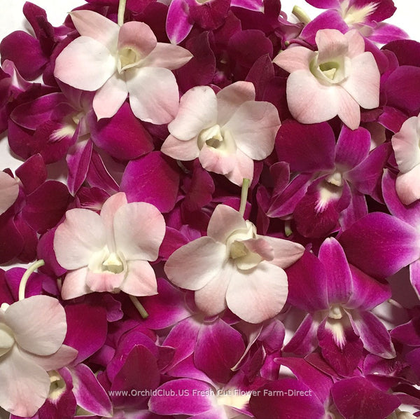 Assortment Loose bloom orchid flowers - TRIO purple peach sonia