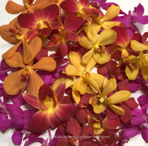 Assortment Loose bloom orchid flowers - 5 colors mokara fancy
