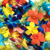 Assortment Loose bloom orchid flowers - 6 colors candy supreme