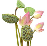 Assortment Lotus (Lotus Pod + Pink)
