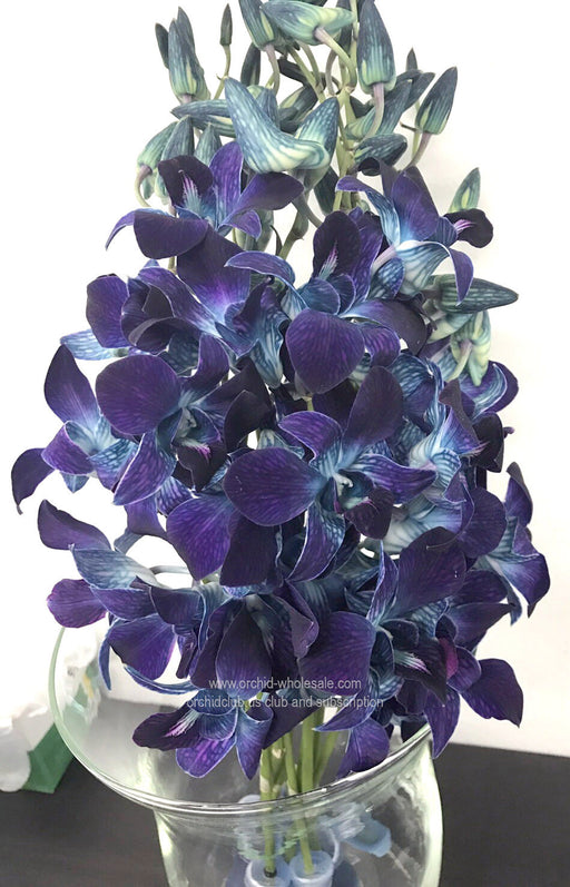 Fresh Cut DYED orchid dendrobium
