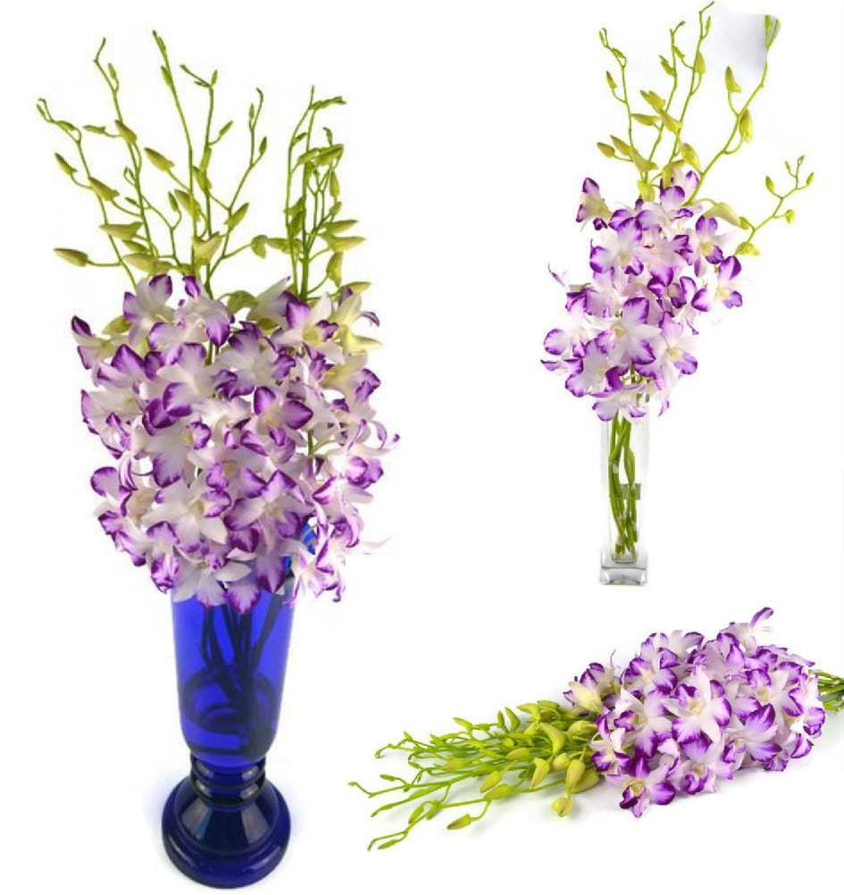 Fresh Cut Orchid Dendrobium Splash Galaxy Novelty Orchid