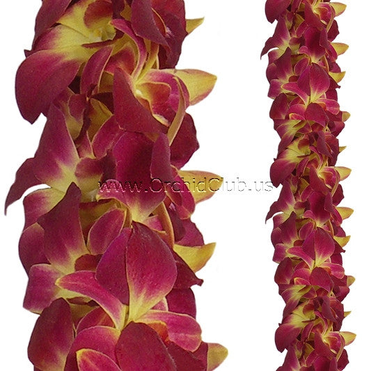 Orchid Garland DOUBLE Yellow Red Sonia Orchid Lei Strand ( 4 FEET & 2 FEET )