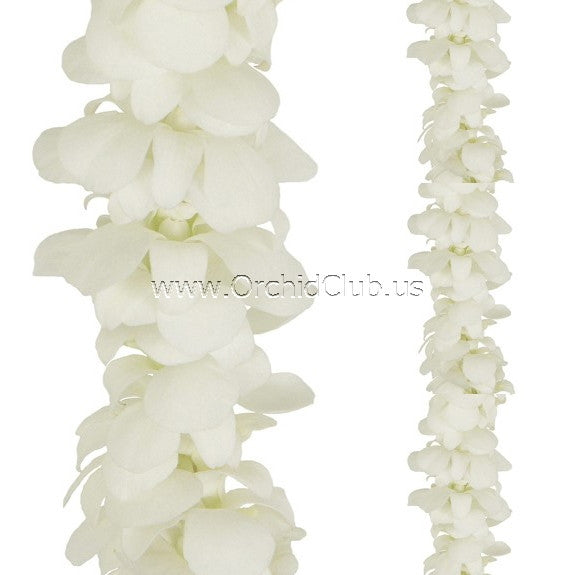 Orchid Garland SINGLE White Orchid Lei Strand (4 FEET & 2 FEET)