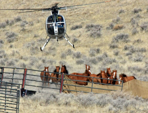 Herded by Helicopter \