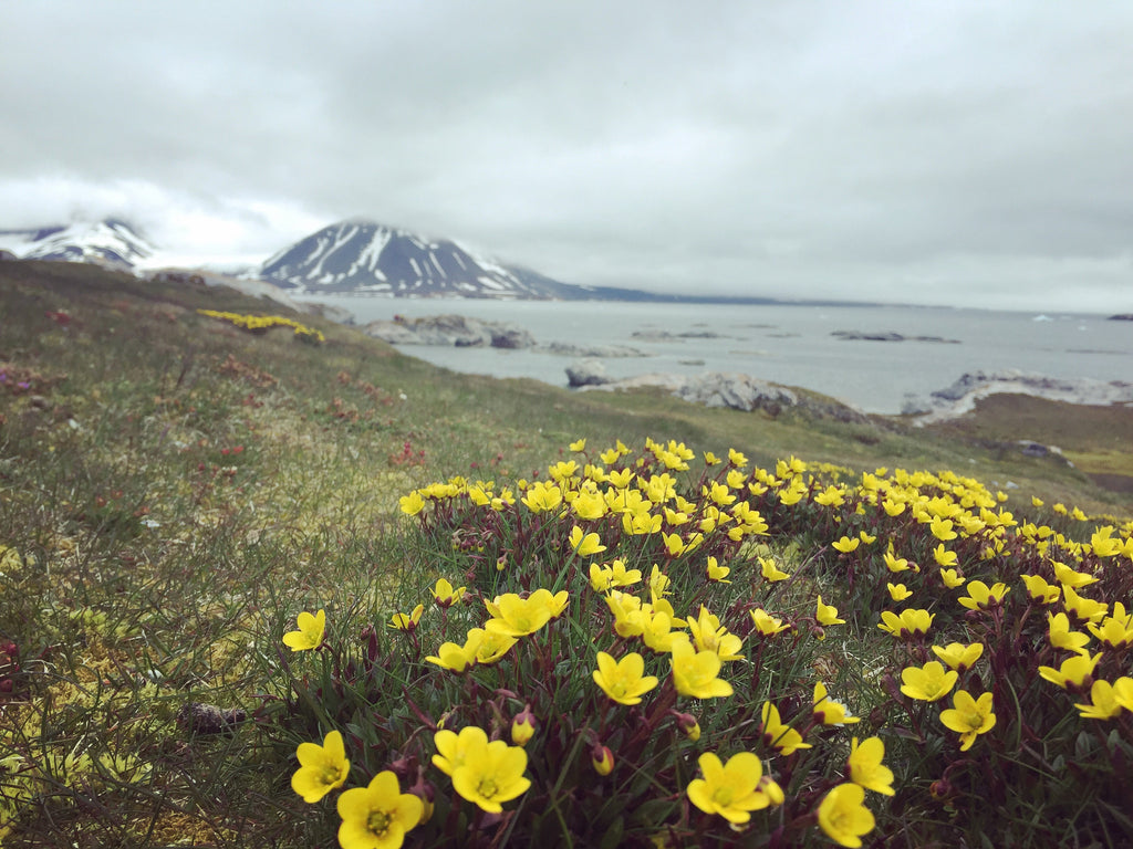 A Cruise up the Coast of Norway Part 4 of 4 – Bjornaoya Island to Longyearbyen