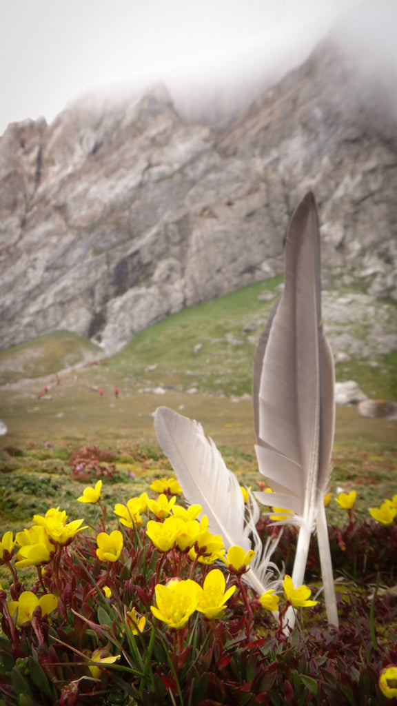 Feathers and flowers on Hornsund Svalbard. Cruising up the coast of Norway part 4 for Resolute Boutique.