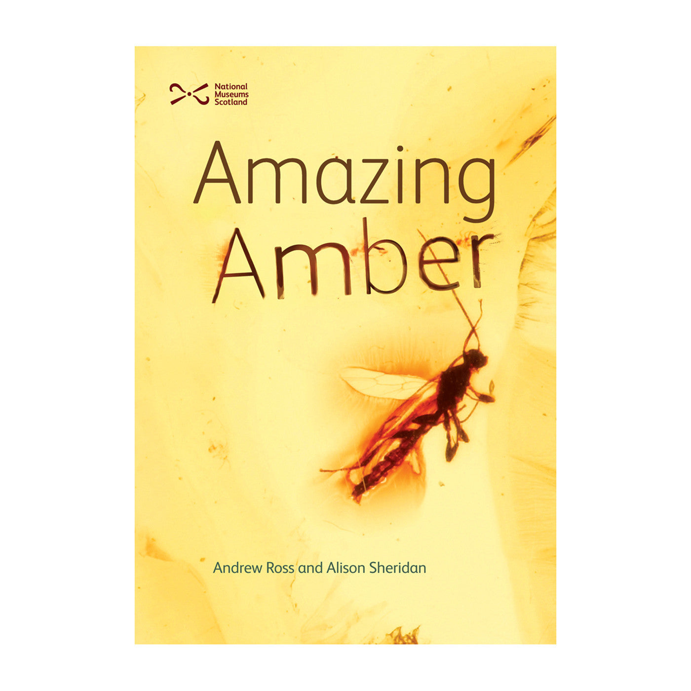 Amber gift ideas amber tree amazing amber reference book by andrew ross and alison sheridan negle Image collections