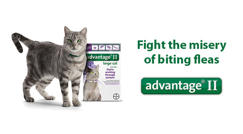 Flea Amp Tick Products Cat Countryside Pet Supply