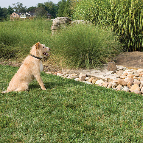 PetSafe Pawz Away Outdoor Pet Barrier (PWF00-11923) - Countryside Pet Supply - 2