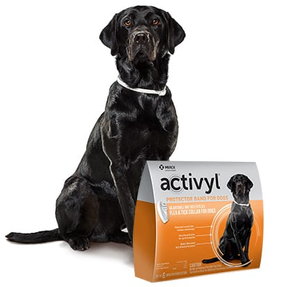Activyl Flea & Tick Protector Band for Dogs - Up To 6 Months Protection