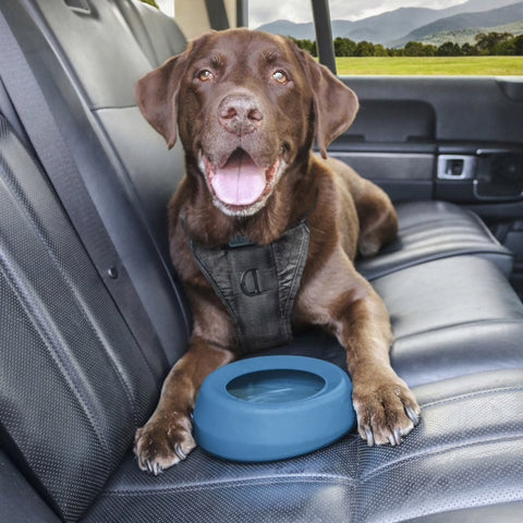 Kurgo Splash Free Wander Dog Water Bowl at Countrysidepet.com