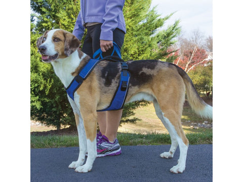 PetSafe EasySport Harness for Dogs in Use.