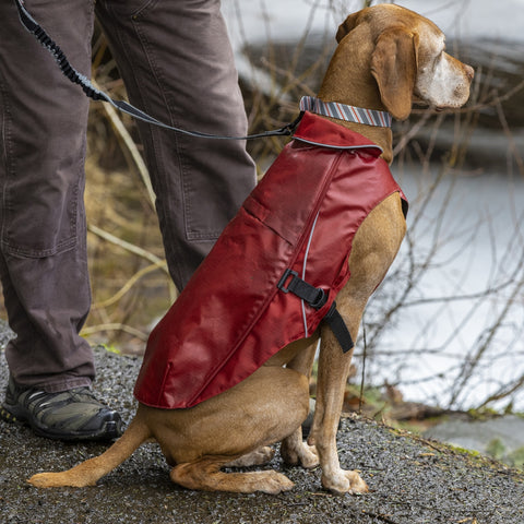 Portsmouth Foul Weather Dog Jacket by Kurgo - Lifestyle - CountrysidePet.com