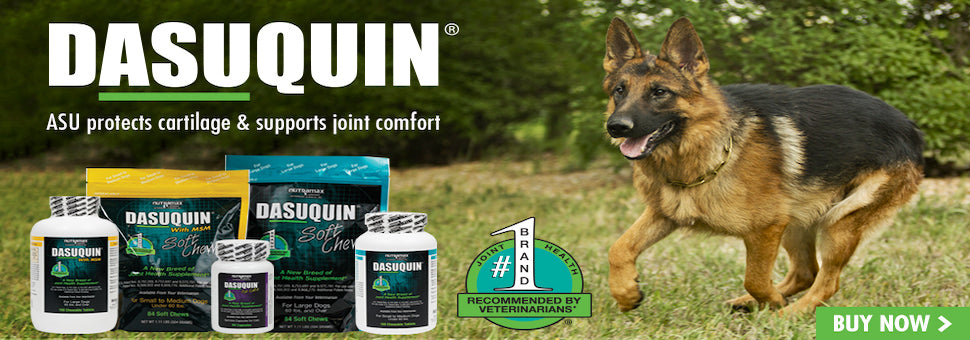 The Top Dog in Joint Health! Cosequin Joint Health Soft Chews Available Here with FREE SHIPPING!