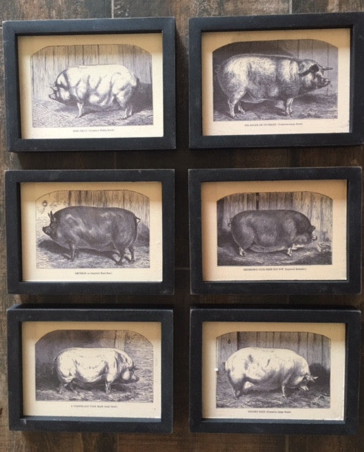 Vintage Pig Prints -Set of 6