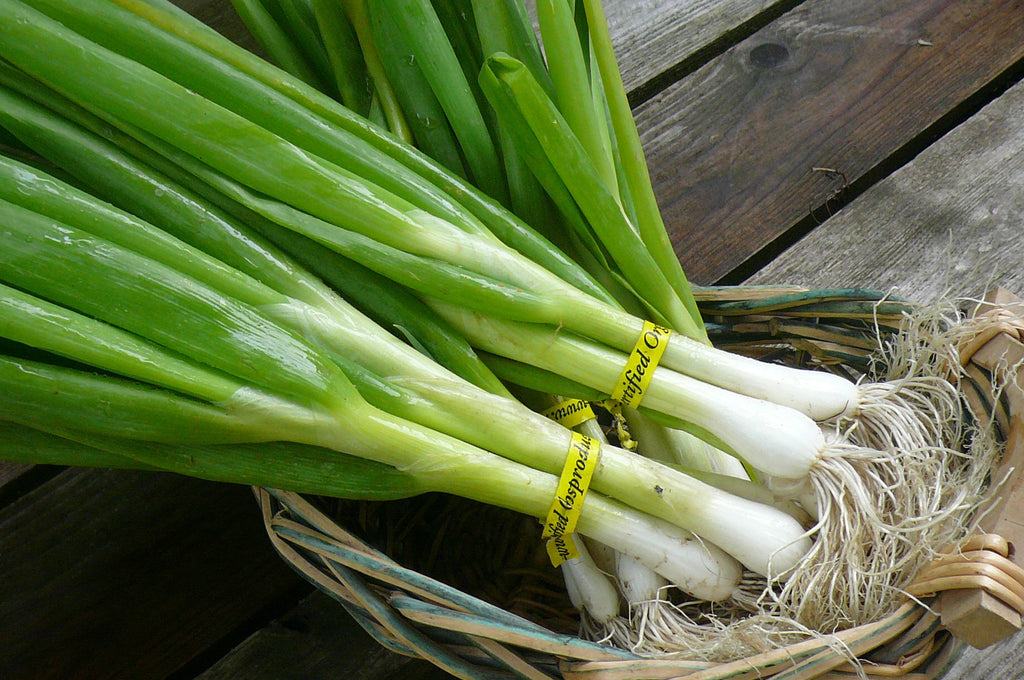 "Scallions (""Green Onion"")"