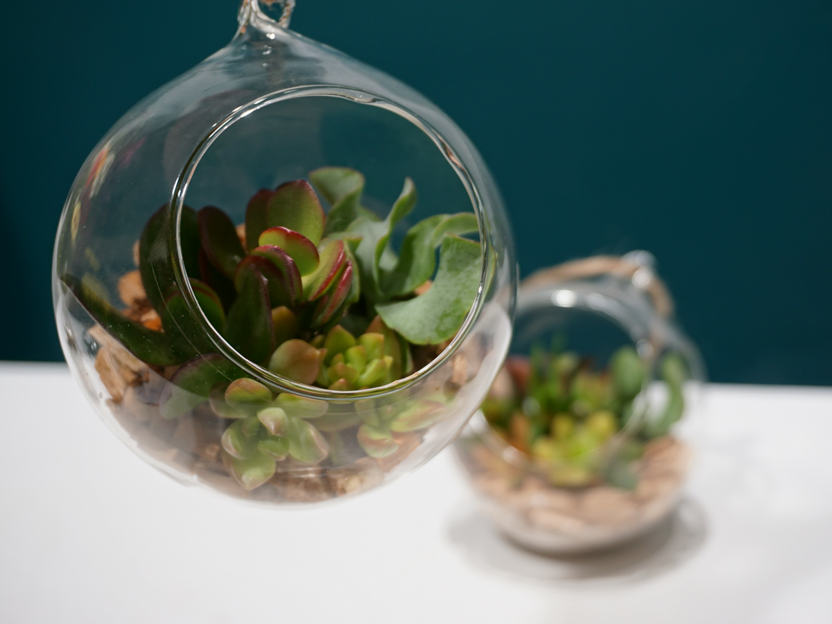 SUCCULENTS / Glass terrarium /