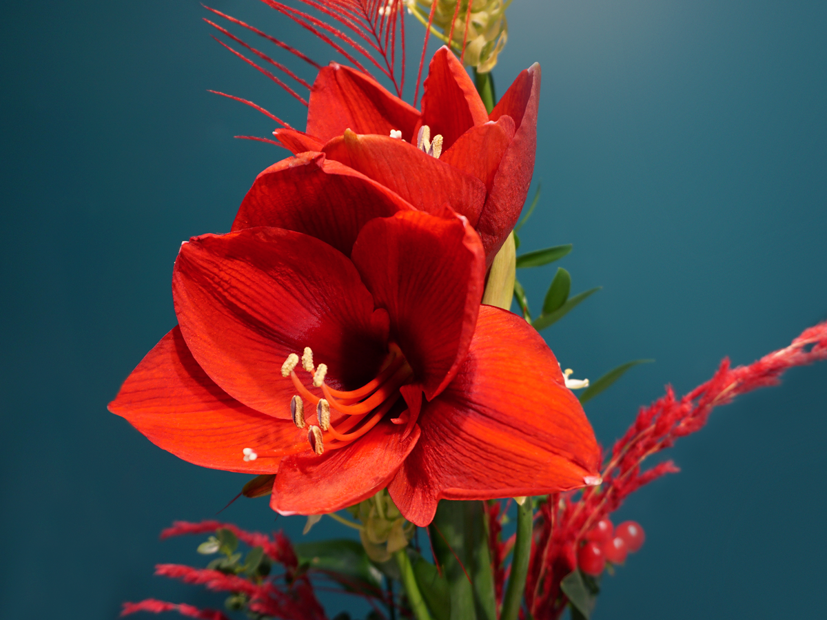 Bouquet of flowers with amaryllis / 03 /