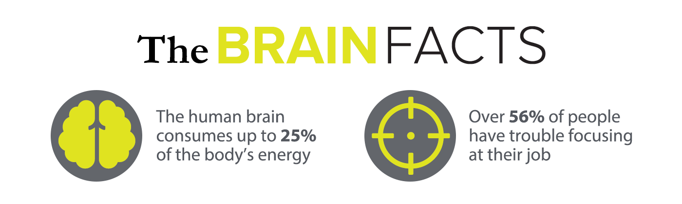 the brain facts