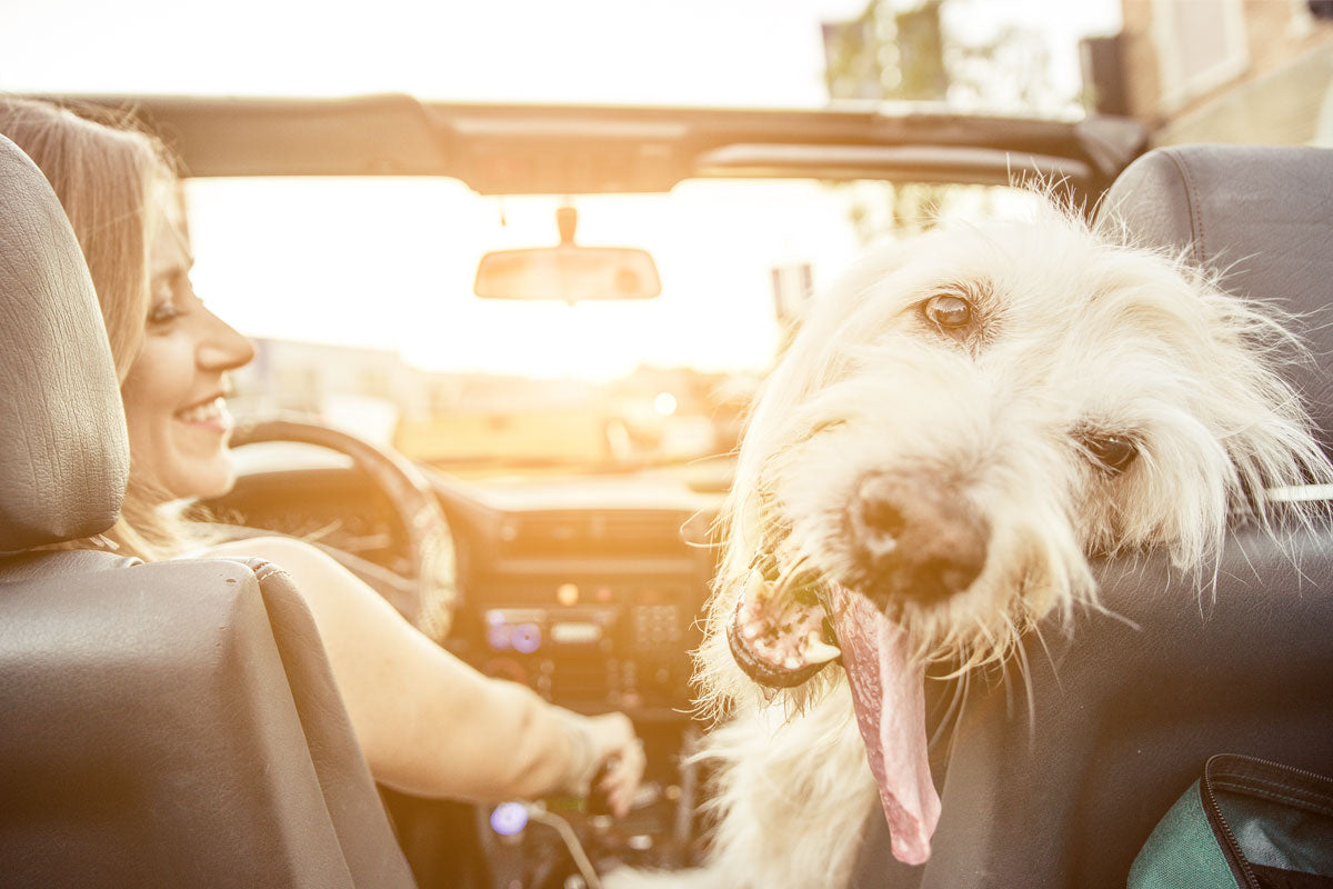 All Aboard! 4 Hacks When Traveling With Your Pet