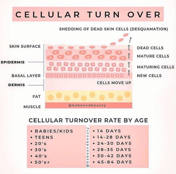 skin cell turnover and how it works