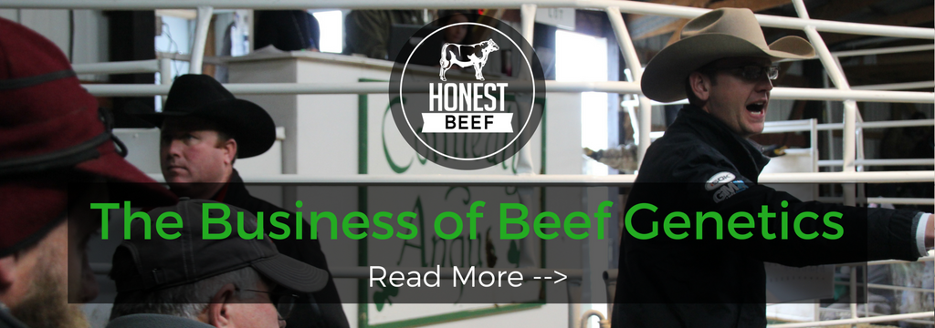 The Business of Beef Genetics - Connealy Angus Bull Sale