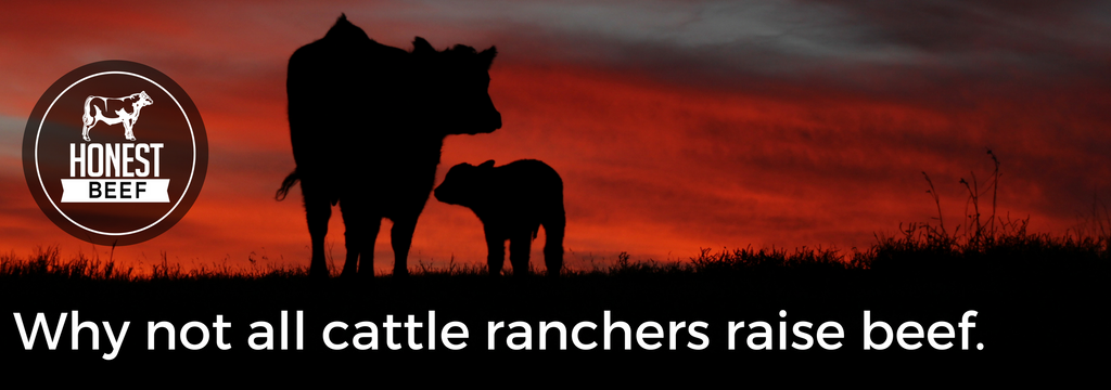 Why not all cattle ranchers raise beef.