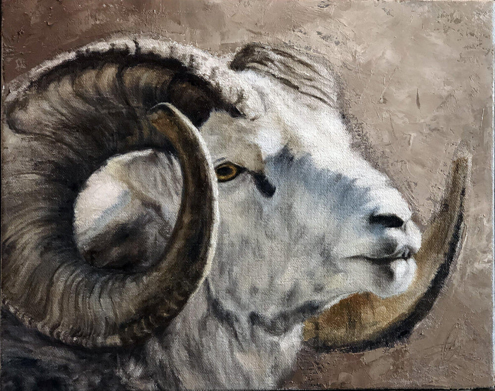 Stone Sheep Portrait