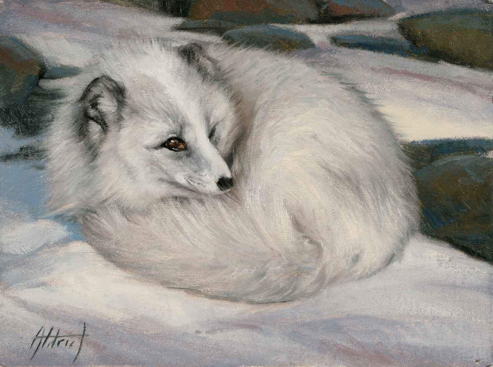 Edward Aldrich-Curled Up ~ Arctic Fox-Sorrel Sky Gallery-Painting