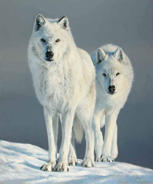 An original oil painting of two white wolves in snowy landscape by award winning wildlife painter Edward Aldrich.