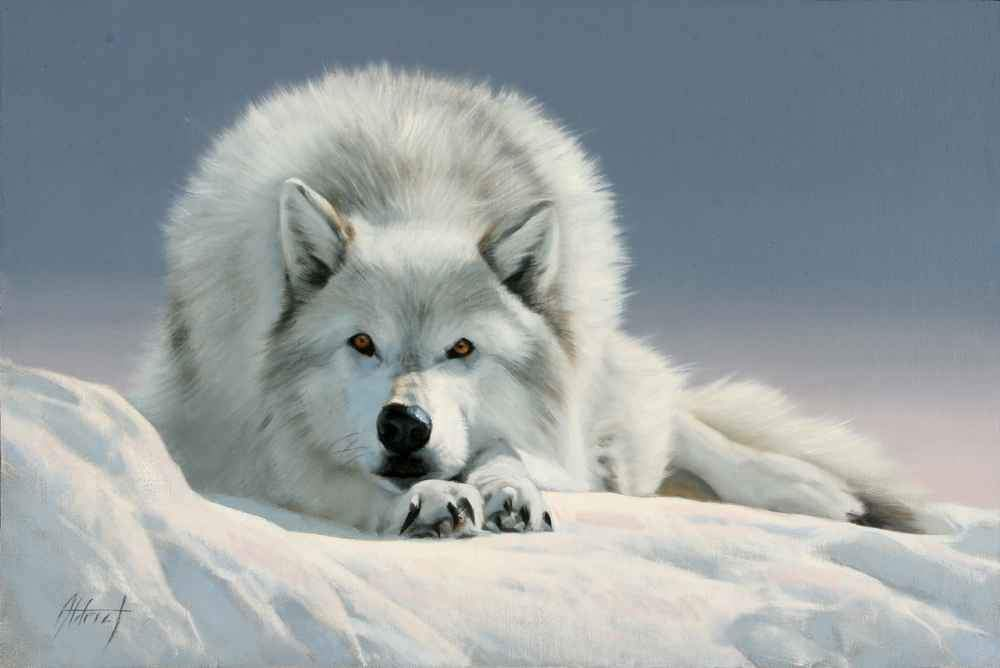 Painting of a white wolf resting in winter. Edward Aldrich wildlife painter. Sorrel Sky Gallery