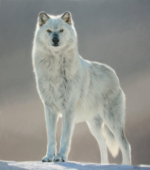 Wolf (Untitled)-Painting-Edward Aldrich-Sorrel Sky Gallery