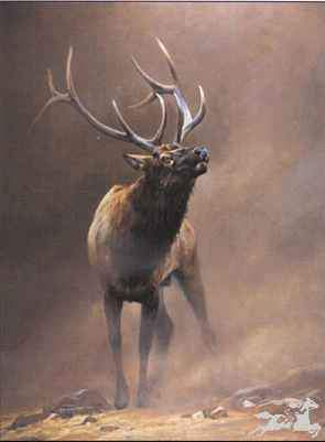 Edward Aldrich. Bull Elk. Elk. Elk Portrait. Sorrel Sky Gallery. Durango Art Galleries. Sorrel Sky. Aldrich Art. Wildlife Art. Wildlife Portrait. Wildlife Paintings.
