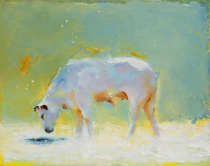 A soft soothing image of a cow standing and drinking from a pond. White Cow, blue-green sky and a white pond.