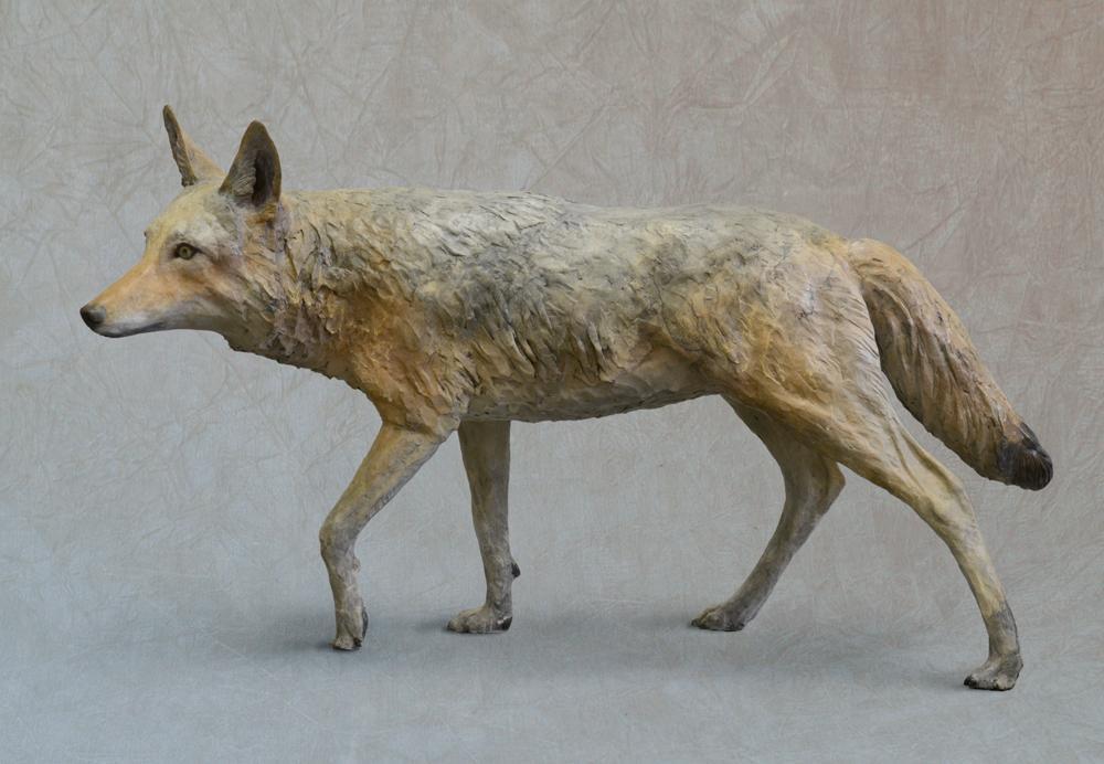 Coyote - Life Size