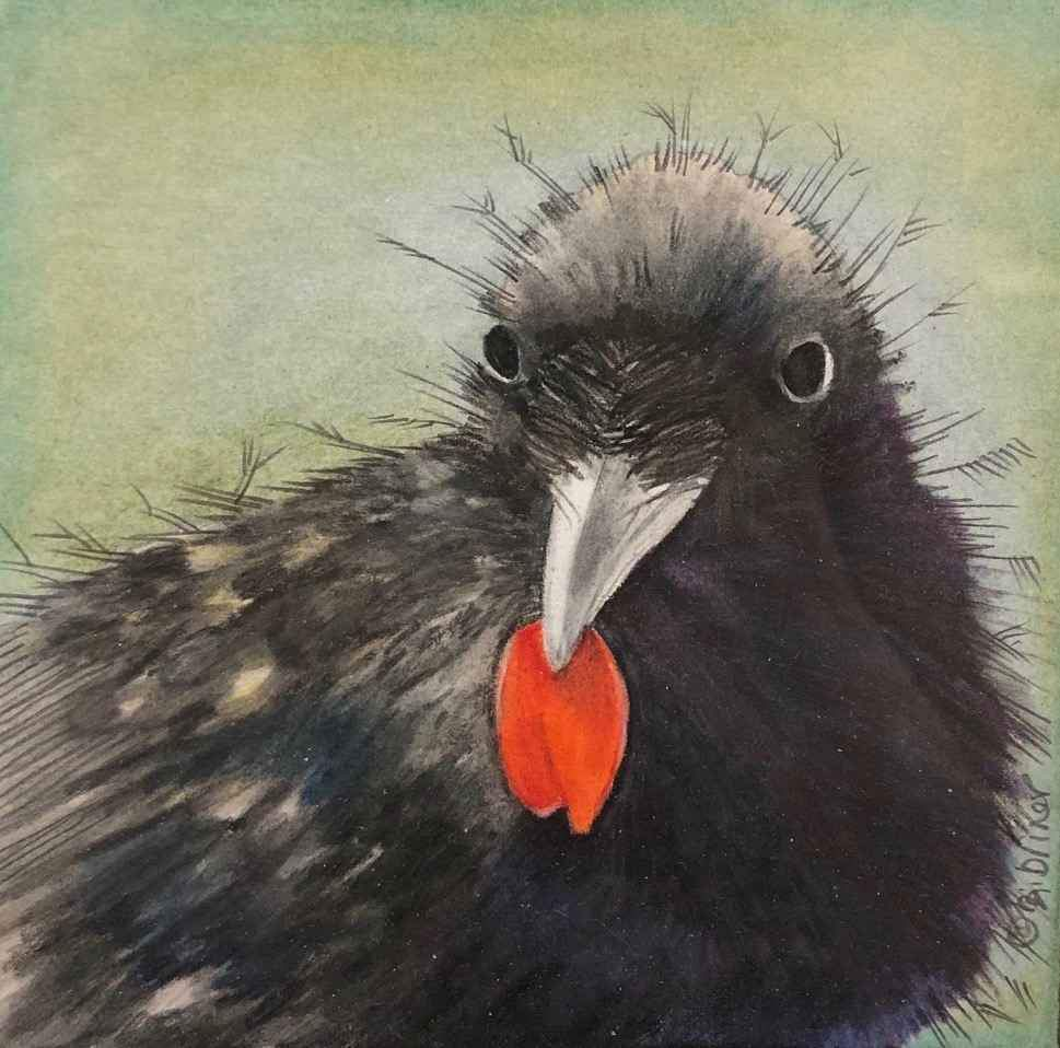 A Black Raven bird holding a red poppy petal. BJ Briner. Sorrel Sky Gallery.