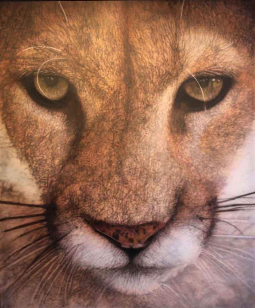 Ray Hare-Sorrel Sky Gallery-Painting-That Mountain Lion