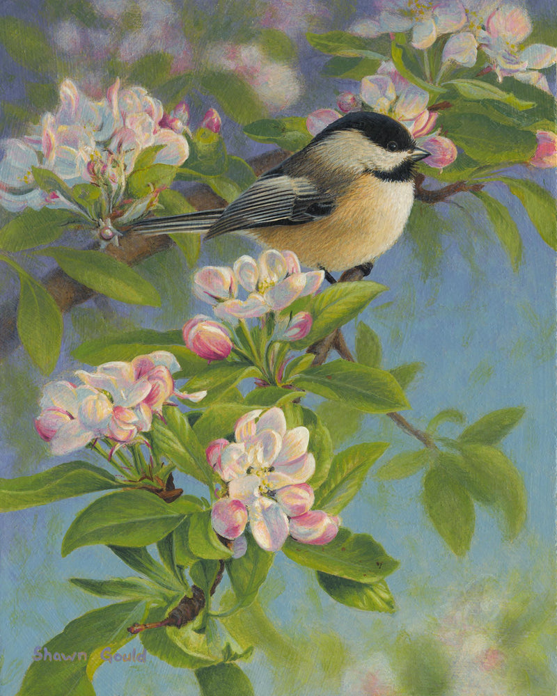 Chickadee and Blossoms-Painting-Shawn Gould-Sorrel Sky Gallery