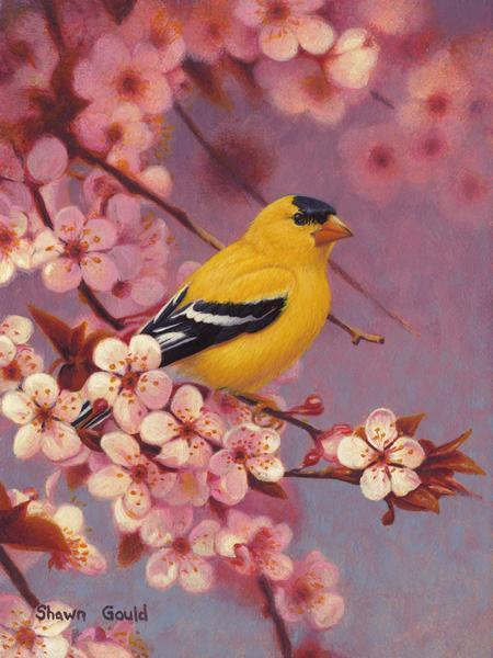 Spring Colors - Goldfinch-Painting-Shawn Gould-Sorrel Sky Gallery