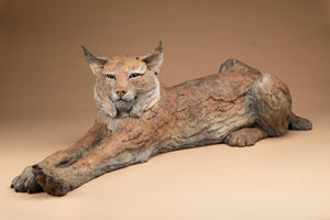 "A stretching bob cat laying down. Bronze by Star Liana York. 40"" long"