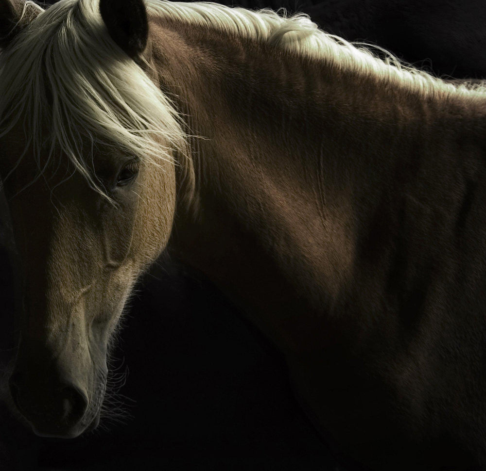 Spirit Horse-Photographic Print-Tony Stromberg-Sorrel Sky Gallery