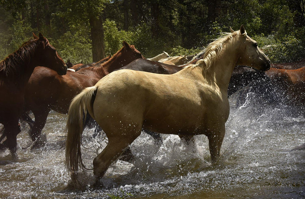 Equine Photography with Tony Stromberg | August 3 - 7 | DURANGO