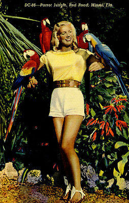 Parrot Jungle - Miami FL - Vintage Postcard Poster