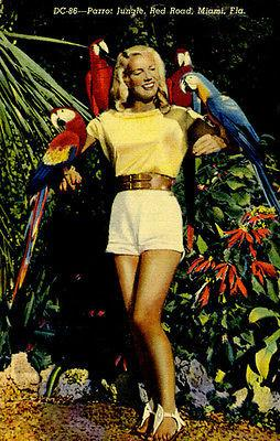 Parrot Jungle - Miami FL - Vintage Postcard Magnet