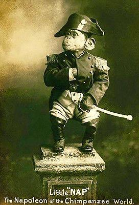 1915 Circus - Little NAP - The Napoleon of the Chimpanzee World #2 - Magnet