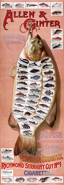 50 Fish From American Waters - Cigarette Card - 1889 - Advertising Poster
