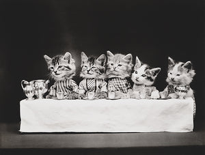 A Hungry Bunch - Cats Kittens Drinking Tea - 1914 - Photo Poster