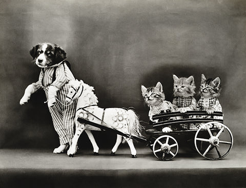 A Joy-Ride - Puppy Kittens Horse Wagon - 1914 - Photo Poster