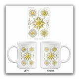 Acanthometra-Stachelstrahlinge - Barbed Rays - 1904 - Illustration Mug